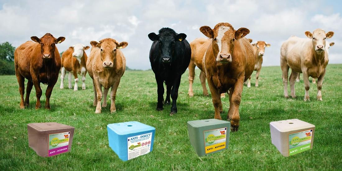 blocuri de lins vaci